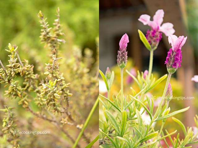 thyme-lavender-littlecookingtips